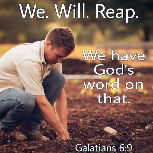 we-will-reap-we-have-gods-word-that
